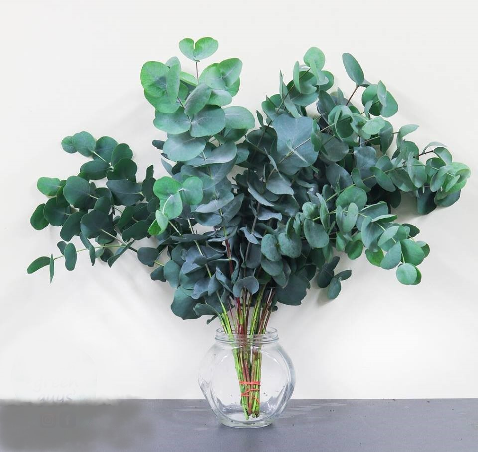 Forest Produce foliage floral solutions